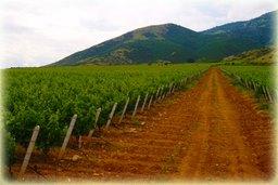 Lazaridis vineyards